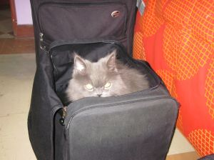 Lucas in my suitcase